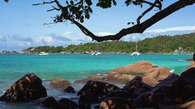r 普拉兰岛 在蓝色海水的美丽的私有游艇在背景 射击从后面树 股票视频
