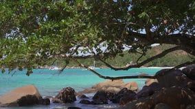 r 普拉兰岛 在蓝色海水的美丽的私有游艇在背景 射击从后面树 股票录像
