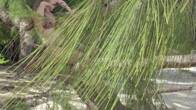 r 普拉兰岛 逗人喜爱的年轻女人坐树干在海滩的水 r 股票录像