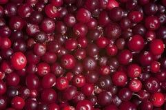 rå bakgrundscranberrieslivstid texture fortfarande Royaltyfri Foto