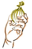 ręce cebula gospodarstwa Royalty Ilustracja