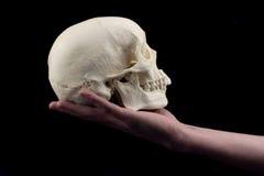 ręce gospodarstwa czaszki Obrazy Royalty Free