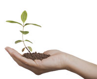 ręce sprout Zdjęcia Stock