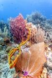 R?cif coralien avec l'?ponge de baril photos stock