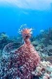 R?cif coralien avec l'?ponge de baril images stock