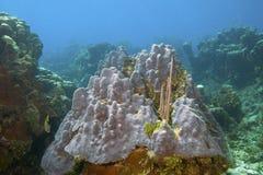 R?cif coralien outre de la c?te de Raotan Honduras photo stock