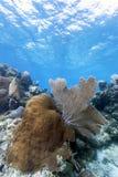 R?cif coralien outre de la c?te de Raotan Honduras image libre de droits