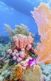R?cif coralien outre de la c?te de Raotan Honduras photographie stock libre de droits