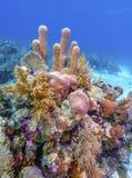R?cif coralien outre de la c?te de Raotan Honduras images libres de droits