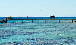R?cif coralien sur la Mer Rouge Eilat photographie stock libre de droits
