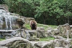 r : Concetto dello zoo Animali al tramonto fotografia stock libera da diritti