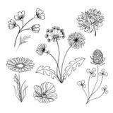 Ręcznie robiony set kwiaty i ziele Fotografia Stock