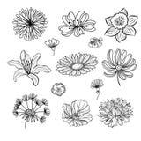 Ręcznie robiony set kwiaty i ziele Zdjęcia Stock