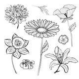 Ręcznie robiony set kwiaty i ziele Obrazy Stock