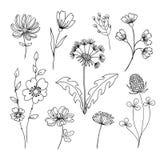 Ręcznie robiony set poly ziele i kwiaty Zdjęcie Stock