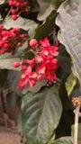 R?d blomma i morgonen royaltyfria foton