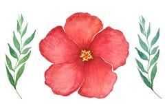 R?d hibiskusblomma p? vit bakgrund stock illustrationer