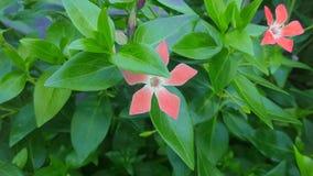 R?da blommor i tr?dg?rd Sk?nheten i natur royaltyfri bild