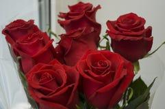 R?da rosor som symbol av f?r?lskelse och passion i buketten fotografering för bildbyråer