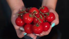 R?da tomater i kvinnah?nder med vattendroppar p? svart bakgrund arkivfilmer