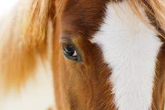 R?flexions dans l'oeil d'un cheval photo stock