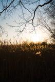 R?gf?lt under en solnedg?ng med den h?rliga solen som shinning i bakgrunden arkivfoto