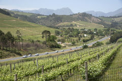 R44 highway Stellenbosch Western cape S Africa. Rows of vines and the R44 highway at Stellenbosch South Africa Scenic landscape Stock Photography