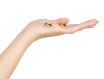 Ręk mrówki Zdjęcia Royalty Free