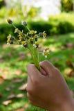 Ręka chwytów kwiat Fotografia Stock