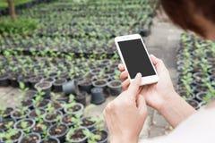 ręka chwyta telefon komórkowy w ogródzie Zdjęcie Stock
