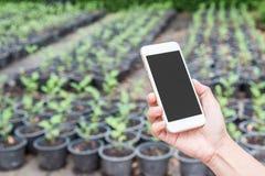 ręka chwyta telefon komórkowy w ogródzie Zdjęcie Royalty Free