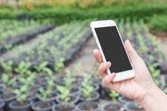 ręka chwyta telefon komórkowy w ogródzie Fotografia Royalty Free