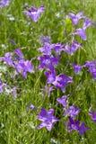 Ręka lili dzwony Zdjęcia Royalty Free