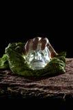 Ręka na Krystalicznej czaszce Zdjęcie Royalty Free