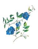 Ręka remisu motyliego grochu kwiaty Zdjęcia Stock