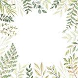R?ka rysuj?ca akwareli ilustracja Botaniczna rama z eukaliptusem, gałąź, paprocią i liśćmi, greenfield elementy kwieci?ci projekt ilustracji