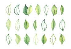 R?ka rysuj?ca akwareli ilustracja Botaniczni wiosna li?cie greenfield elementy kwieci?ci projekt?w Doskonali? dla ?lubnych zapros ilustracji