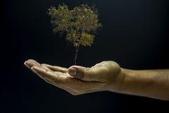 Ręka target189_1_ drzewa Obrazy Royalty Free