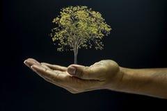 Ręka target189_1_ drzewa Obraz Royalty Free