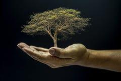 Ręka target189_1_ drzewa Fotografia Stock