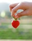 ręka - wybór truskawka Fotografia Stock