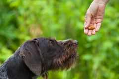 Ręka z fundy szkolenia psem Fotografia Stock