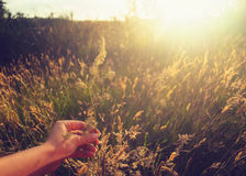 Ręka z kwiatem Zdjęcie Stock