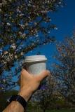 R?ka z papierowym fili?anka kawy europejska stolica - Kolorowy Sakura czere?niowy okwitni?cie w parku w Ryskim, Wschodni - obraz stock