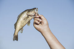 Ręka z ryba Zdjęcie Stock