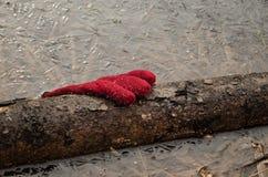 Rękawiczka w lodzie Zdjęcia Royalty Free