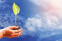 Ręki i drzewa z niebem Fotografia Stock