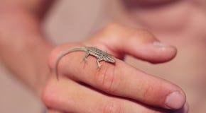 ręki jaszczurka Zdjęcia Stock
