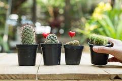 Ręki mienia kaktusowy garnek na drewnianym tle Zdjęcia Stock