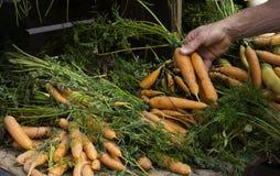 Ręki mienia marchewki obraz stock